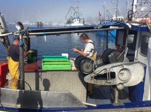 Fisch direkt vom Kutter Insel Fehmarn
