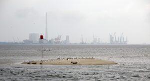 Eine Robbe und im Hintergrund die Hafenanlagen von Esbjerg