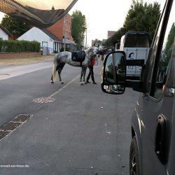Pferde am Übernachtungsplatz in Bray Dunes