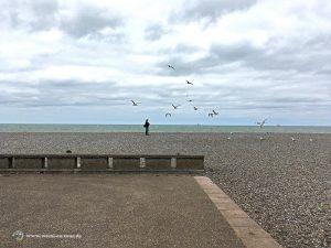 Möven am Strand von Dieppe