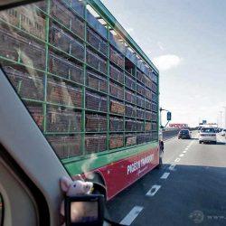 Eine typische Situation auf der englischen Autobahn. Ein LKW biegt auf der Einfädelspur von links auf die Autobahn.
