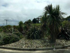 Palmen in der Bretagne